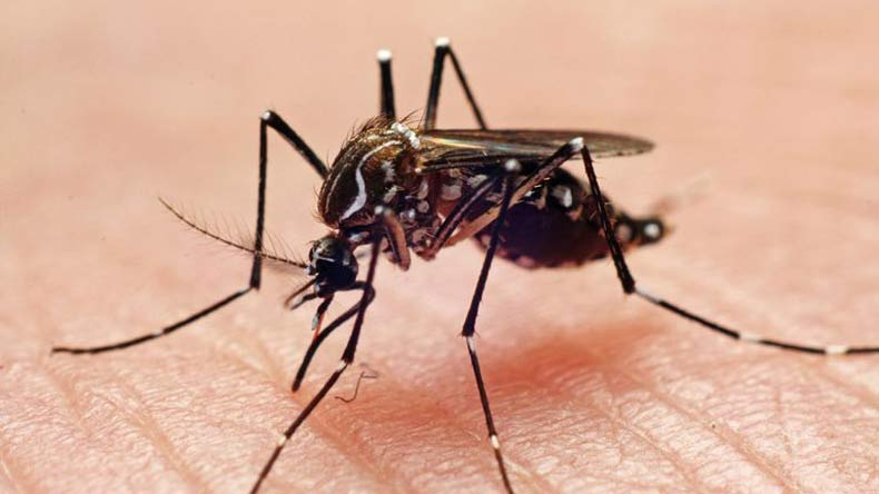 At least 16 die from mosquito-borne diseases in Manipur