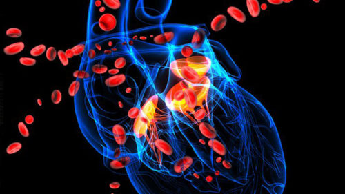 One-third deaths worldwide due to cardiovascular diseases: Study