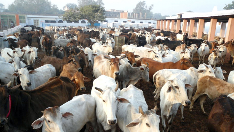 SC to hear plea against ban on sale of animals for slaughter