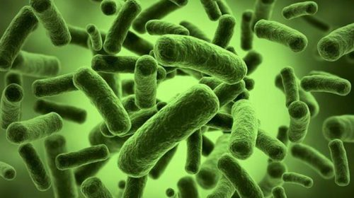 Gut bacteria might help slow down ageing