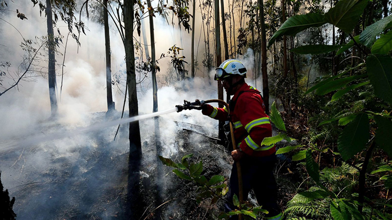 'Arsonists started' Portuguese forest fire that killed 64