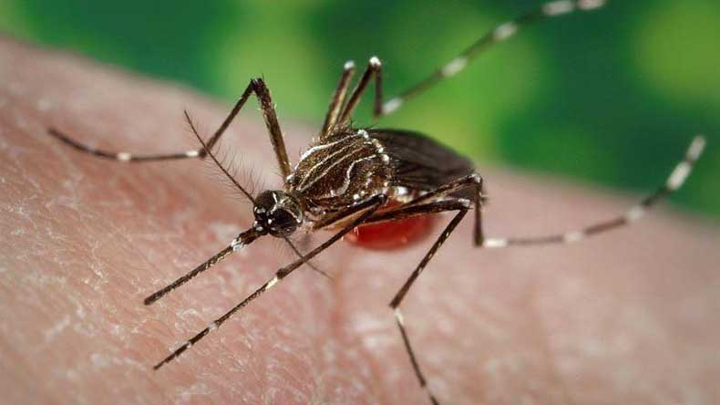 Potential drug discovered to fight effects of Zika virus