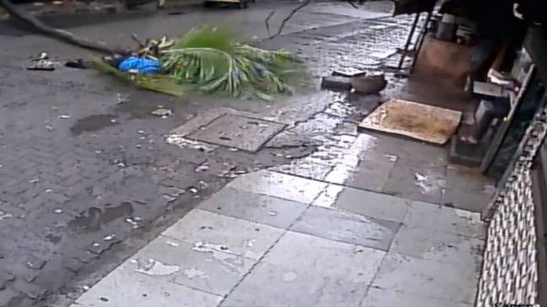 Woman dies after coconut tree falls on her