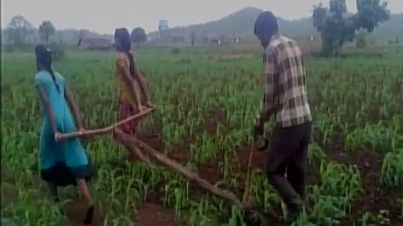 Shocking! MP Farmer Uses Daughters To Pull Plough In Fields