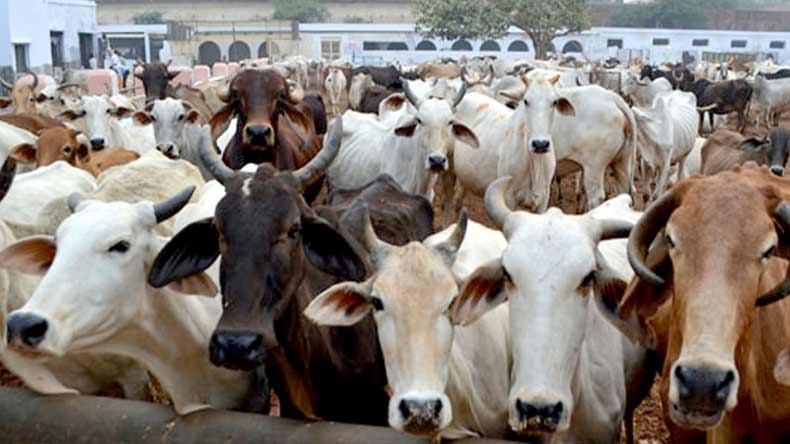 Cow's milk harmful for toddlers below one year