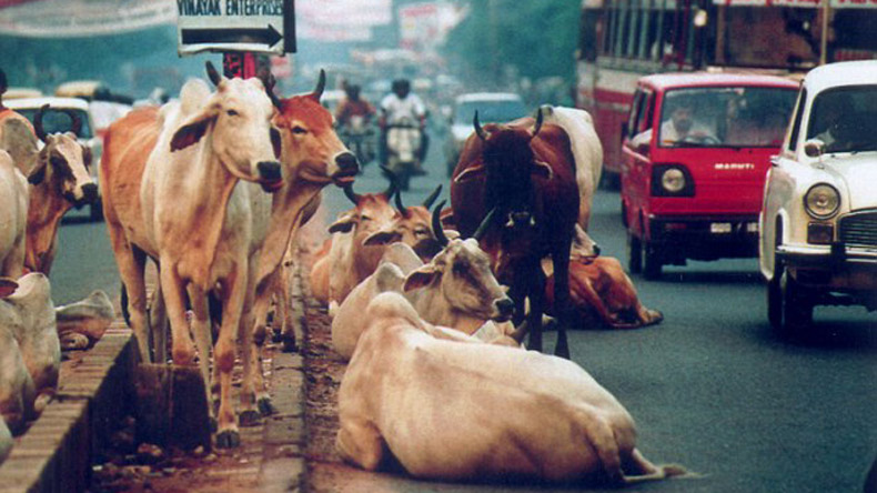 UP's cow-care hypocrisy: Pitiable state of 'gaushalas'