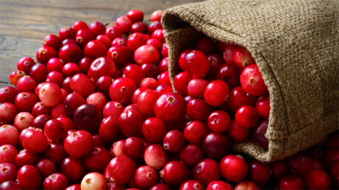 Cranberries may help cut urinary tract infections