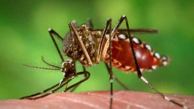 Scientists doing research to map global mosquito distribution through cell phones