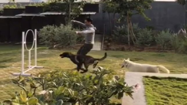 WATCH! This video of Mahendra Singh Dhoni training his dogs is winning the internet