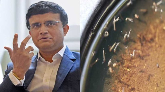Kolkata: Dengue larvae found in Sourav Ganguly's house; KMC sends notice
