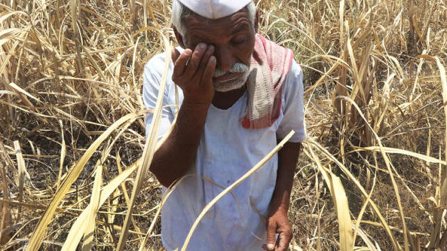 Marathwada: Farmers accuse IMD of monsoon inflating forecast figures; file complaint