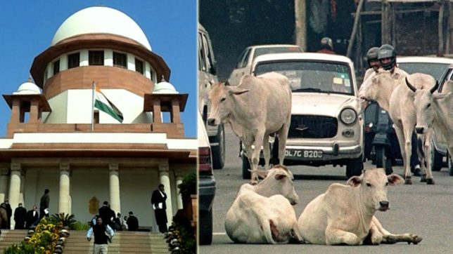 Take action to stop cow vigilante groups, Supreme Court tells Centre and state governments