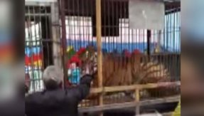 Caught on camera: Caged Zoo tiger bites hand of elderly man in China