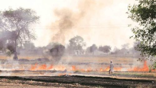Stubble burning by Indian farmers cause for smog in Pakistan: Officials
