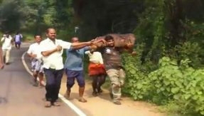 Act of kindness: Forest official carries baby elephant on his shoulder to reunite with mother elephant