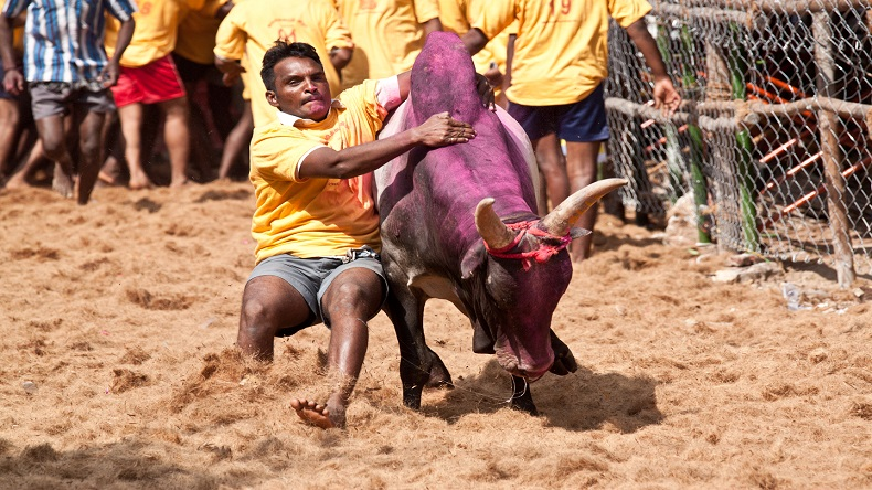 Prevention of Cruelty to Animals Act, Tamil Nadu's traditional Jallikattu, Madurai district, Chief Minister K. Palaniswami, Mattu Pongal, Kannum Pongal, Tamil Nadu Jallikattu, bull taming, regional news, national news, india news, Pongal festivities, Madurai