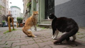 Film festival in Istanbul focuses on cats
