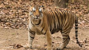Arunachal Pradesh: Dibang Valley to be highest site for tiger census 2018