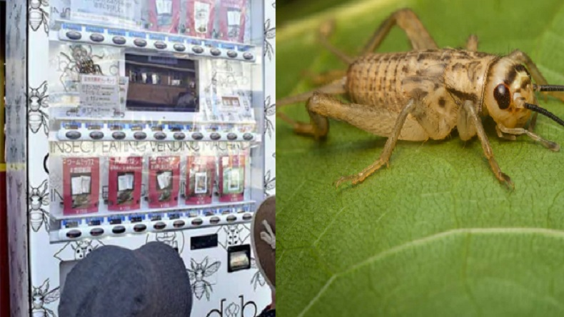 insect vending machine, japan, Kumamoto machine, Takeo LLC, Toshiyuki Tomoda, crickets, unicorn beetles, tarantulas