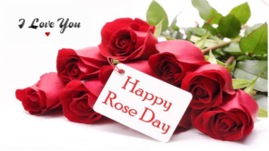 Happy Rose Day 2019,Rose Day 2019 WhatsApp Stickers, Rose Day 2019 Animated Gif, Rose Day 2019 HD pictures, Rose Day 2019 wallpapers to wish Happy Rose Day to Girlfriend, Rose Day 2019 wallpapers to wish Happy Rose Day to Boyfriend, husband and Wife