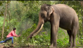 Junglee Song Garje Gajraj Hamare: Vidyut Jammwal, Pooja Sawant's latest track pays tribute to the elephants, watch video
